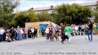 Dog Show Best  Всероссийская выставка ранга Ч.РФЛС ''Азия Осень-2015'' 12.09.2015 Алтай Барнаул