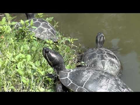 Acquario d 39 acqua dolce per tartarughe 150 l appena ter for Acquario per tartarughe piccole