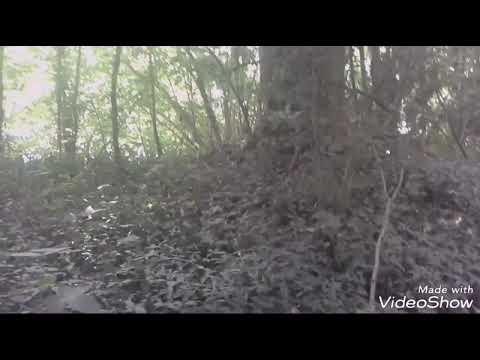 Sortie détection dans un bois