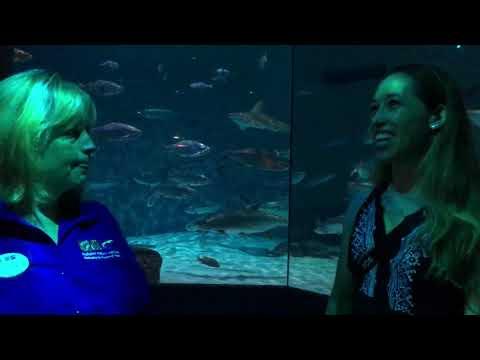 celebrate-shark-awareness-day-at-the-audubon-aquarium