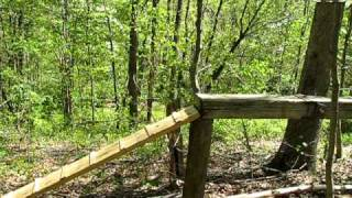 Dog Training-obstacle course