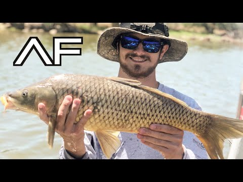 ARIZONA CARP AND CATFISH FISHING!!!