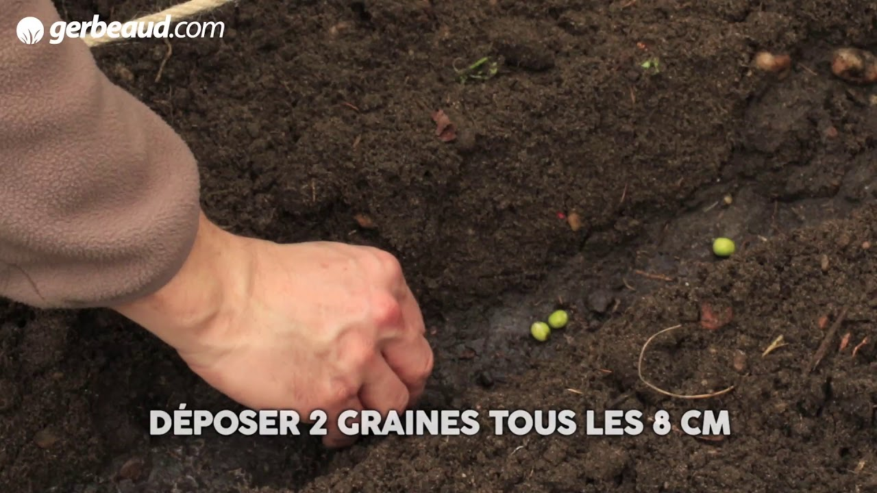 Ou Planter Une Rhubarbe rhubarbe : planter, cultiver, récolter