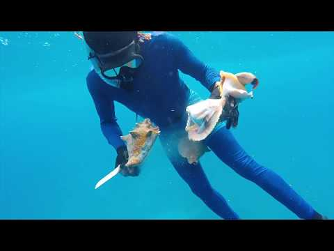 Spear Fishing in Jamaica 2.0