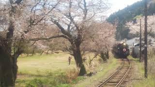 2019.3.31 大井川鐵道SL急行かわね路号C10-8号機さくらHM付き!!