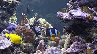 Akvaario: Pasi Haillan merivesiakvaario