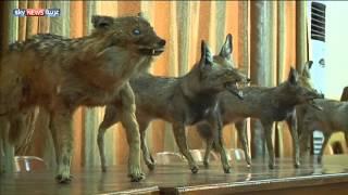 معرض لحيوانات وزواحف محنطة في البصرة