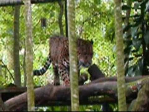 Parque Simon Bolivar Zoo.  San Jose, Costa Rica
