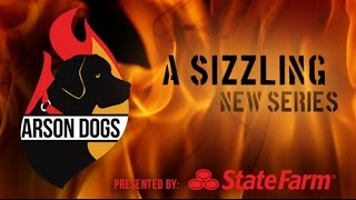 Arson Dogs Trailer  |  Victoria Stilwell Positively