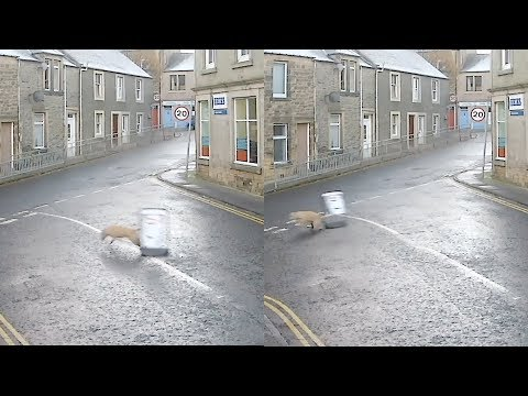 Dog Runs Away with Sign from Outside Corner Shop