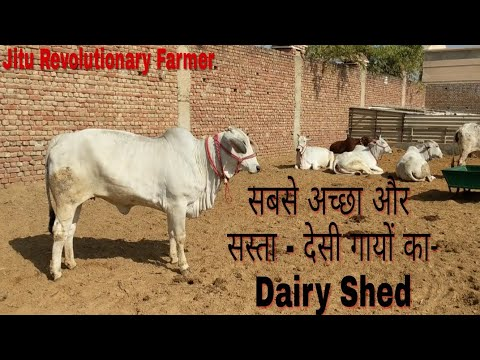 DESI COWS - BEST DAIRY Shed Design and Management -A2 Milk- @ Khurana Dairy Farm Rohtak, Haryana. thumbnail