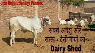 DESI COWS - BEST DAIRY Shed Design and Management -A2 Milk- @ Khurana Dairy Farm Rohtak, Haryana.