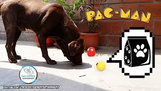 Pacman in real life 8