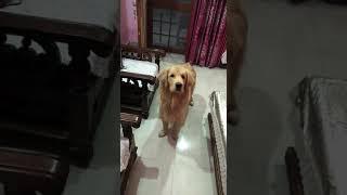 Cute puppies videos