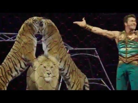 Alexander Lacey Big Cat Clinic - Meet the Cats