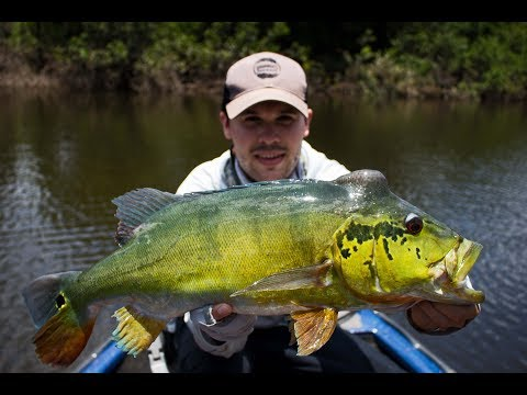 Fly Fishing: Brazil Blog - Amazon River Fly Fishing With Nomadic Waters