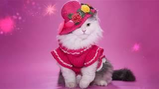 Красавицы кошки.  Детские стихи.