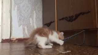 Super amazing kittens fight over the food / Веселые котики