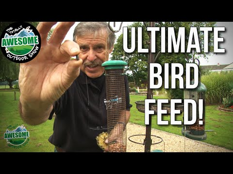 How To Attract Wild Birds To Your Garden | TA Outdoors