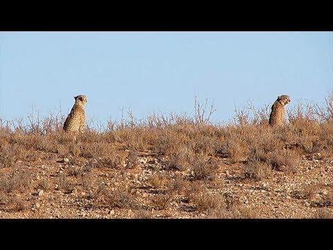 Namibia erleben/Teil 51-Kgalagadi-Transfrontier-Park 2017/Blümchentour