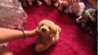 Opening My Webkinz Signature Golden Retriever!