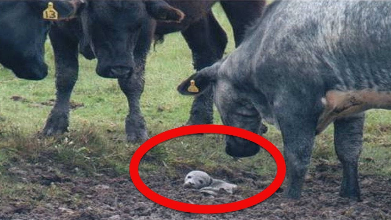 after-this-seal-pup-got-stuck-in-the-mud-she-was-helped-by-the-most-unlikely-rescuers