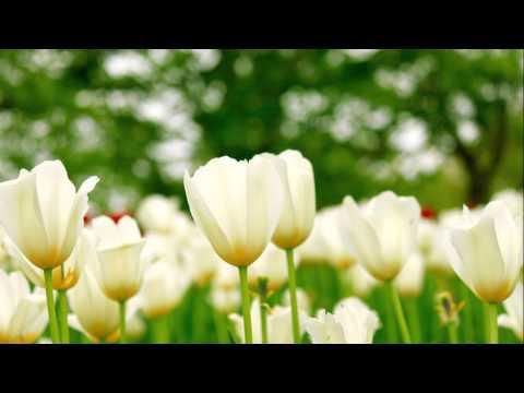 白い色は恋人の色 ベッツイ&クリス cover  okatto510