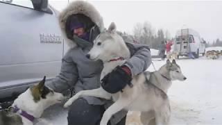Sled dog Musher Documentary