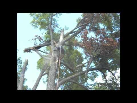 Sugar maple management after 2011 summer storm near Wakefield, Quebec, Canada