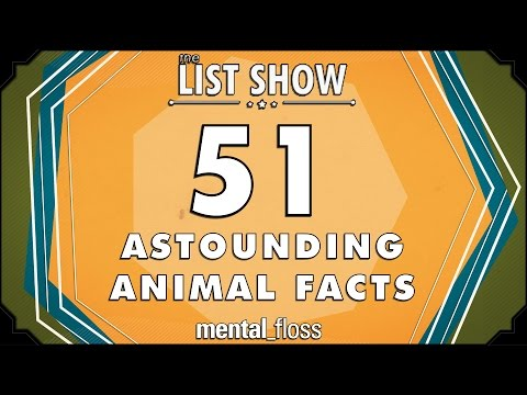 51 Astounding Animal Facts - mental_floss on YouTube - List Show (301)