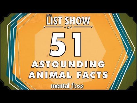 51 Astounding Animal Facts  mentalfloss on YouTube  List Show 301