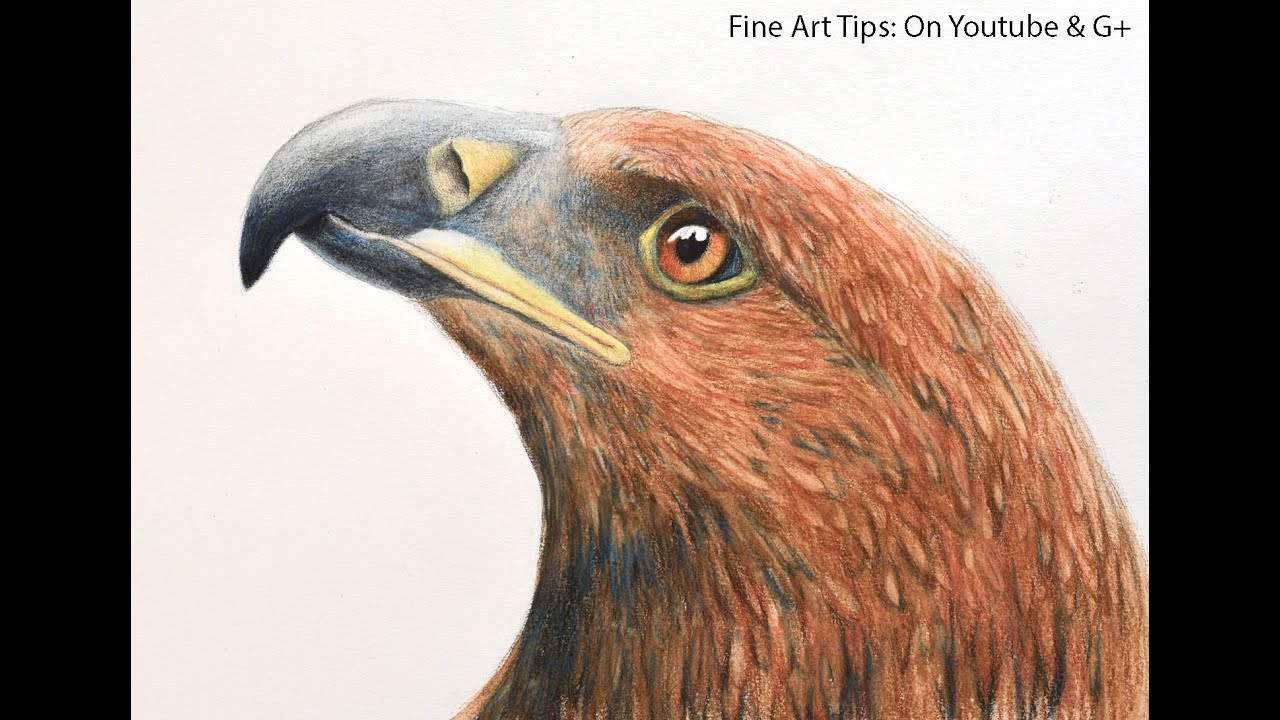 How to Draw an Eagle's Head With Watercolor Pencils - YouTube