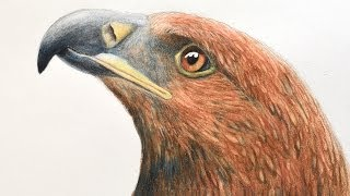 How to Draw an Eagle's Head With Watercolor Pencils(Visit me on FB: https://www.facebook.com/LeonardoPereznieto Follow Fine Art Tips on Google+: http://goo.gl/TqsmiJ Do you want to help me translating it into ..., 2014-01-21T16:00:01.000Z)