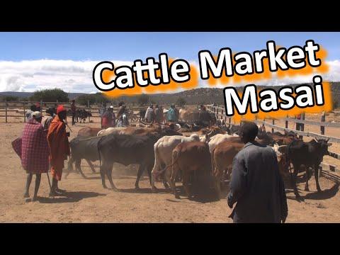Kenya - Masai Cattle Market