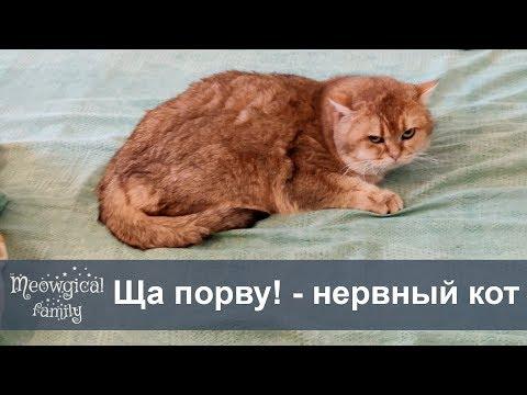 Кот Баюн - успокаивающее для котов