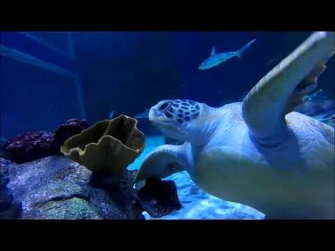 A Visit to the Living Planet Aquarium in Salt Lake City