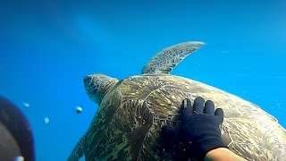 Nager avec une tortue de mer   SONY ACTION CAM  
