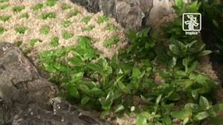 The Advanced Plant Aquarium, Tropica Aquarium Plants