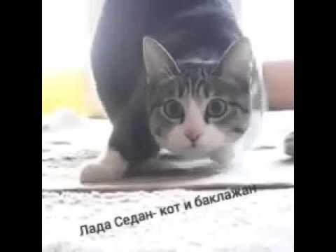 Лада коты видео