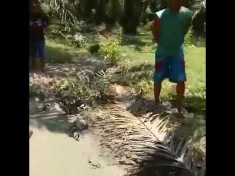 Fenomena Semburan Lumpur di Mamuju Pasca Gempa Palu