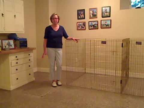 Best Flooring For Indoor Dog Kennel Businesses How To