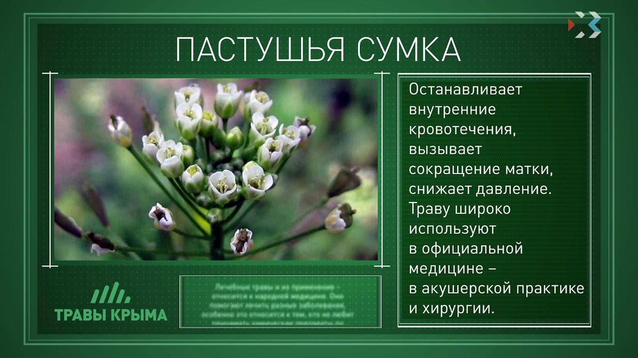 лекарственные травы крыма фото и описание причина