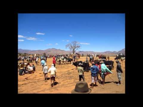 Animal market in Madagascar
