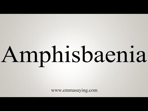 How To Pronounce Amphisbaenia
