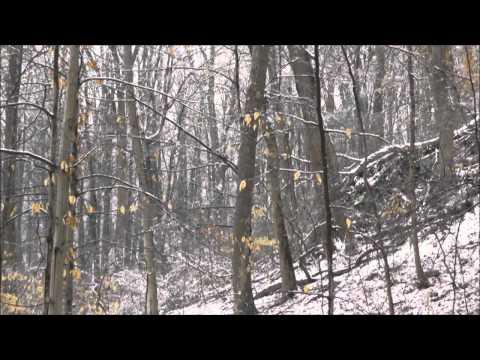 Aphex Twin - rhubarb orc. 19.53 rev [unrev mono edit]