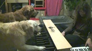 Perfect Pitch Dogs Play Piano - New Version