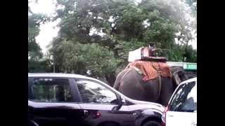 elephant woundring in delhi