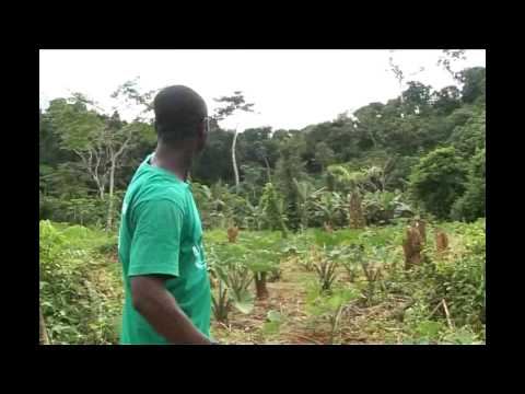 West African Primate Conservation Action - WAPCA