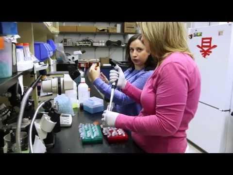 Masters Program in Biomedical Research Technologies  |  Cincinnati Children's
