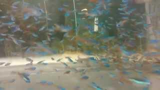 Голубой неон
